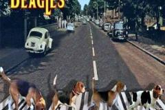 Beatles-abbey-road-parodie-12